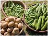 栽培作物・農園の紹介