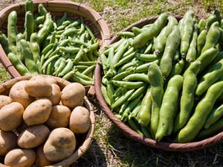 栽培作物と特徴